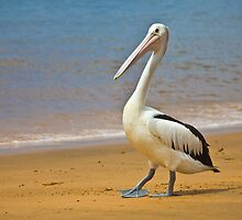 Hungry Pelican by Dean Cunningham