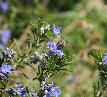 Beeing There - Rosemary by WalnutHill
