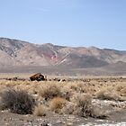 Ruins On The Desert by marilyn diaz