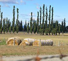 hay bales by Anne Scantlebury