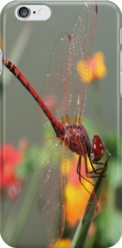 Red Dragonfly by taiche