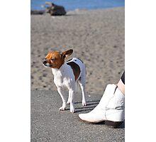 Alki Beach Pup Photographic Print