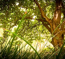 Lying in the grass by Emma  Gilette
