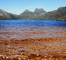 Blue and Gold, Dove Lake, Cradle Mountain,Tasmania, Australia. by kaysharp