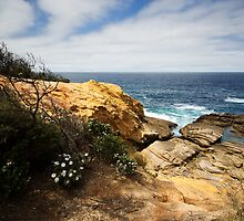 Flora and Sandstone by Shelley Warbrooke