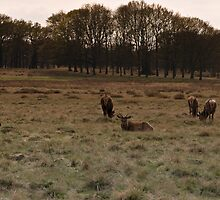 richmond park april 2012v6 by Adam Glen