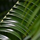 Palm Branch by dez7