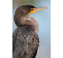 Double-Crested Cormorant #1 by akaurora