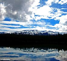 Natures mirror image by Erika Price
