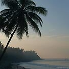 Palm Trees and Varkala Beach by SerenaB