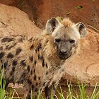 Hyena A by Tony Brown