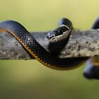 Little Snake! by vasu