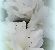 White Azalea Two iPhone Case by Betty Northcutt