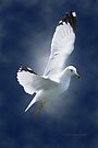 White Gull by Yannik Hay