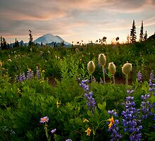Lupine Sunset by DawsonImages