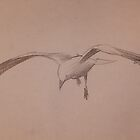 Flying Gull by Kayla001
