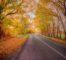 Woodside Autumn, Adelaide Hills, SA by Mark Richards