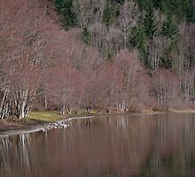 Deer Lake by Sheri Bawtinheimer