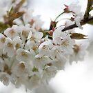 Qui sait combien de fleurs seront tombées encore ? by HiljaisenArt
