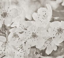 Little Apple Blossoms by Denise Abé