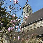 Holy Trinity Church with magnolia by lizjames