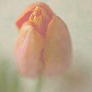 Tulip by Elma Claassen