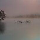 Wyaralong Dam by D Byrne