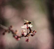 Buzz Around by SkyeKZ