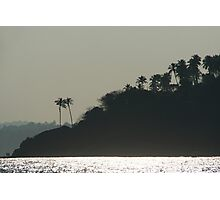Palm Trees on Monkey Island Photographic Print