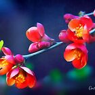 Painted Quince Blossoms by Anita Pollak