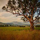 Towong Tree by Emma  Gilette