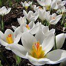 Spring!Spring!Spring! by Irina777