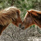 Love Is In The Air by Monte Morton