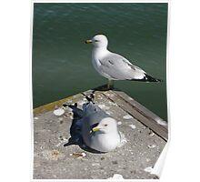 Love Gulls Poster