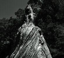 Great Cypress Knee by joevoz