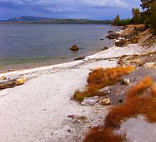 Yellowstone shoreline by Erika Price