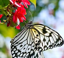 Butterfly Dream by jrphotography05