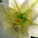 Easter Lilly up close and personal by Ron Russell