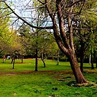 Dublin - Merrion Park by rsangsterkelly