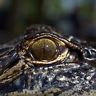 You Have Alligator Eyes! by freevette