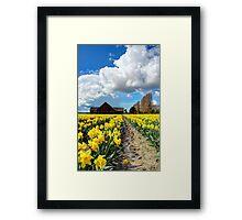 Daffodil Fields 5 Framed Print