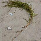 Seaweed by decorartuk