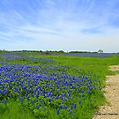 Blue Bonnet wildflowers in Texas. by Ronee van Deemter