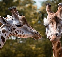 Secret Giraffe by Paul-M-W