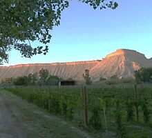 Mount Garfield at Dusk, Clifton, Colorado by afairlady