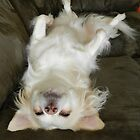 Mom, my belly needs rubbing! by Heather Crough
