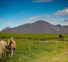 Crazy views of Iceland, Horses. by Cappelletti Benjamin