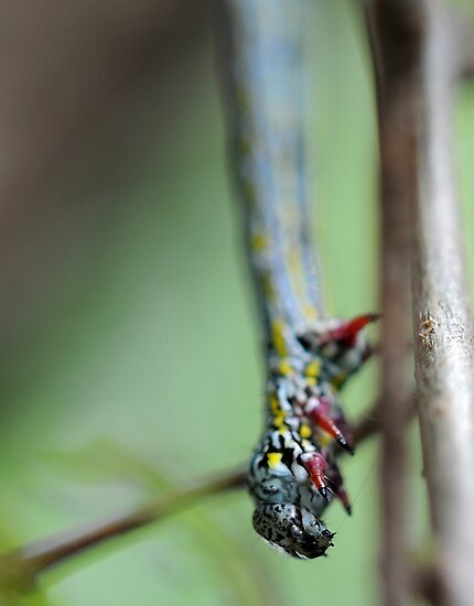 Caterpillar on a tree by Adrian Cusmano