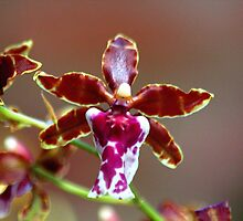 Orchid 07 by freevette