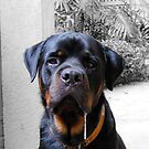 Rotweiler With Drool by Nathan Leary
